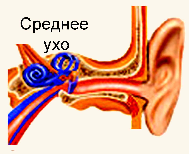 отит наружнего уха лечение: