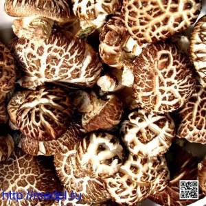 Антиоксиданты грибы шиитаке