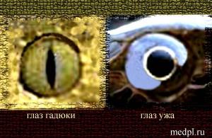 Глаза змеи